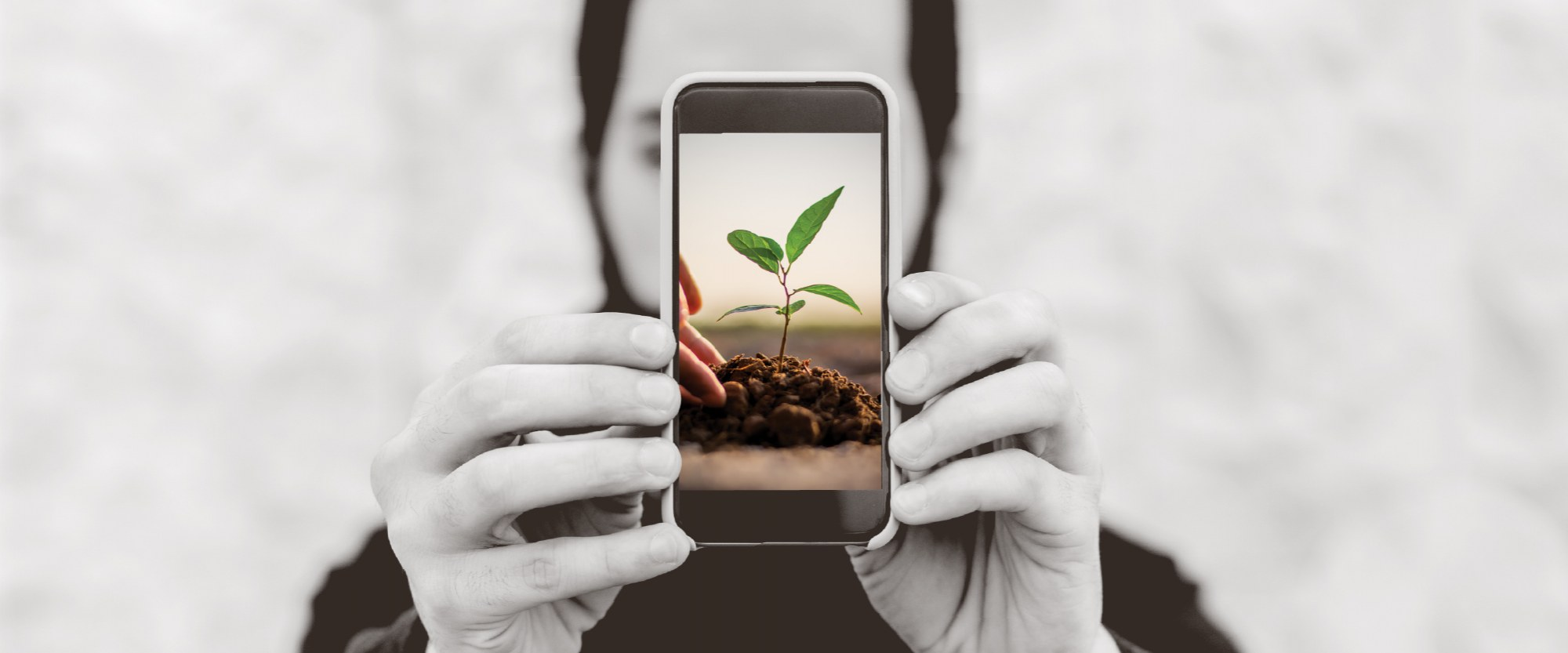 hands holding a mobile phone with an image of a green plant bursting out of the soil